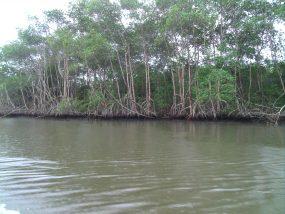 Mapeamento das áreas úmidas da Sub-Bacia do Rio Juqueriquere, nos Municípios de Caraguatatuba e São Sebastião, SP